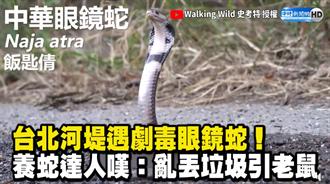台北河堤遇眼鏡蛇!養蛇達人嘆:亂丟垃圾引老鼠