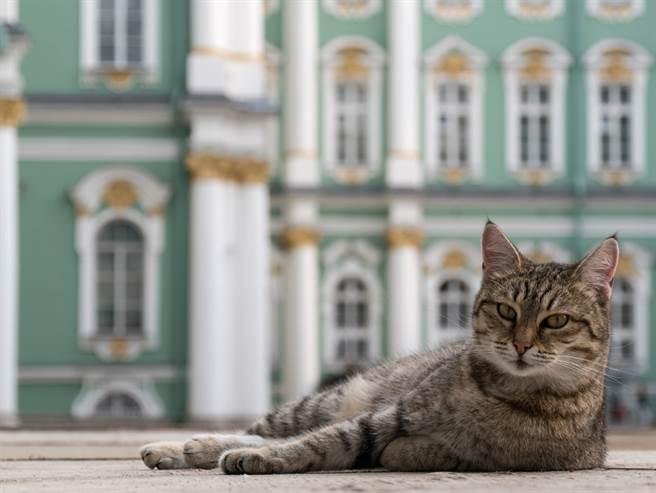 50隻冬宮貓平時由博物館工作人員與志工照護,資金則全靠捐助。(圖/達志影像)