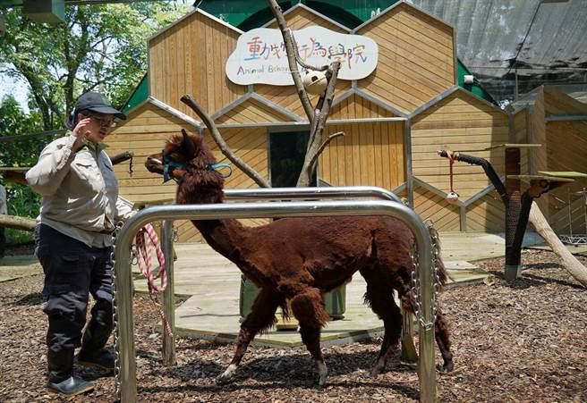 「動物行為學院」即將於明年農曆春節過後正式開張。(台北市立動物園提供/游念育台北傳真)