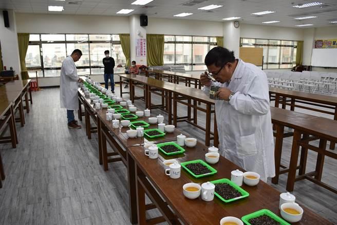 全國冬季東方美人茶評鑑比賽,擔任評審的茶改場祕書吳聲舜先從嗅聞茶葉香葉開始。(謝明俊攝)