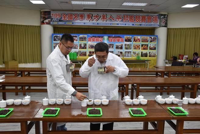 全國冬季東方美人茶評鑑比賽,擔任評審的茶改場祕書吳聲舜輪流試喝茶湯。(謝明俊攝)