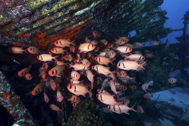 Yorko的攝影作品主題多變,不論生物的大小、種類,都令人驚豔。圖為二戰遺跡魚礁@ Kawanishi H8K。(照片提供/Yorko Summer)
