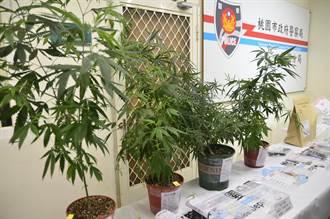 奔騰思潮:葉家興》一個地球,兩種大麻