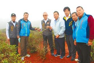 120公頃茶樹枯死 10年來最慘