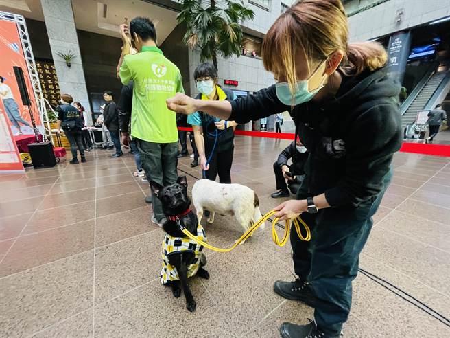 浪愛滿屋!北市力推犬貓認養站 認識毛孩還享好康。(吳康瑋攝)