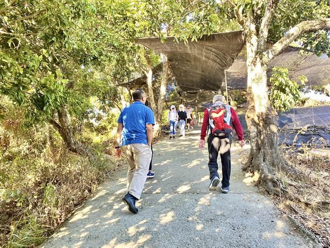 大坑9號步道平緩好走,即使平日也是遊客如織。(台中市觀旅局提供/王文吉台中傳真)