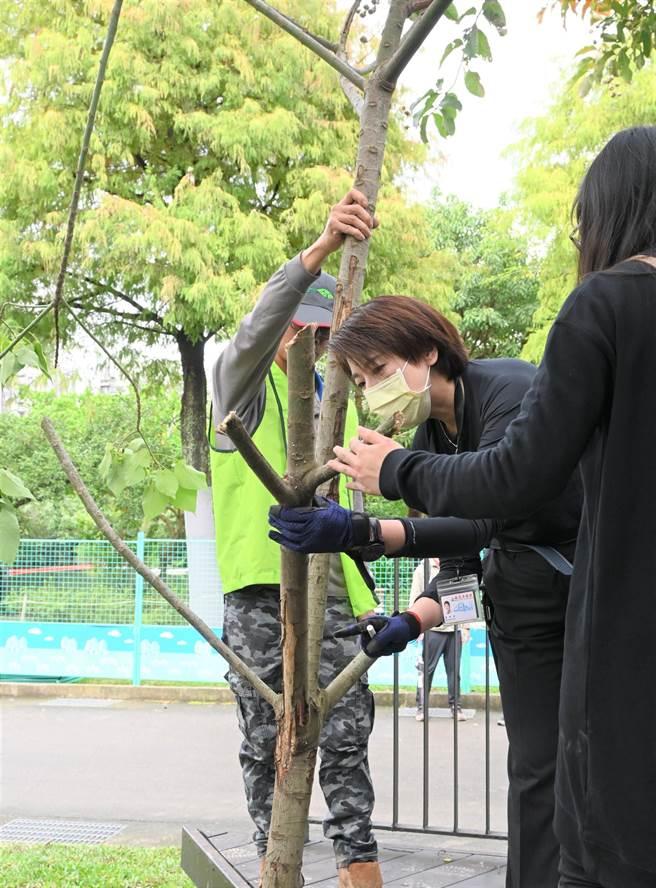 大安森林公園之友基金會舉辦第一屆「大安森林公園樹木修剪示範交流活動」,台北市副市長黃珊珊今天出席活動。(主辦單位提供)