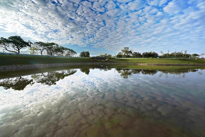 樹林河濱環保公園內的沐心池,像鏡子般清澈透亮,池內有許多台灣特有種魚類。(圖由新北市水利局提供)