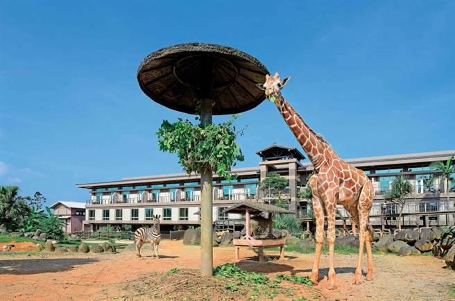 到新竹來場全方位的非洲文化體驗。(圖/六福莊.關西提供)