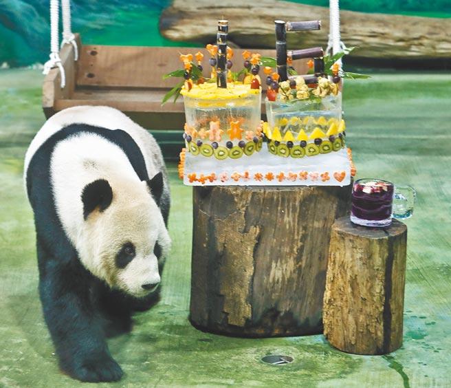 大陸贈送給台灣的大貓熊取名團團、圓圓。圖為今年8月,台北市立動物園為團團圓圓舉行16歲慶生趴。(本報系資料照)