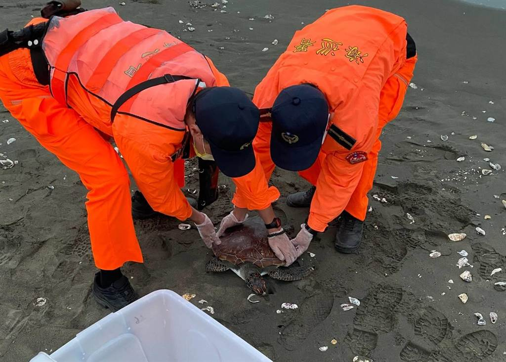 綠蠵龜命喪鹿耳門沙灘,海巡署呼籲民眾重視海洋環保。(海巡署提供/程炳璋台南傳真)