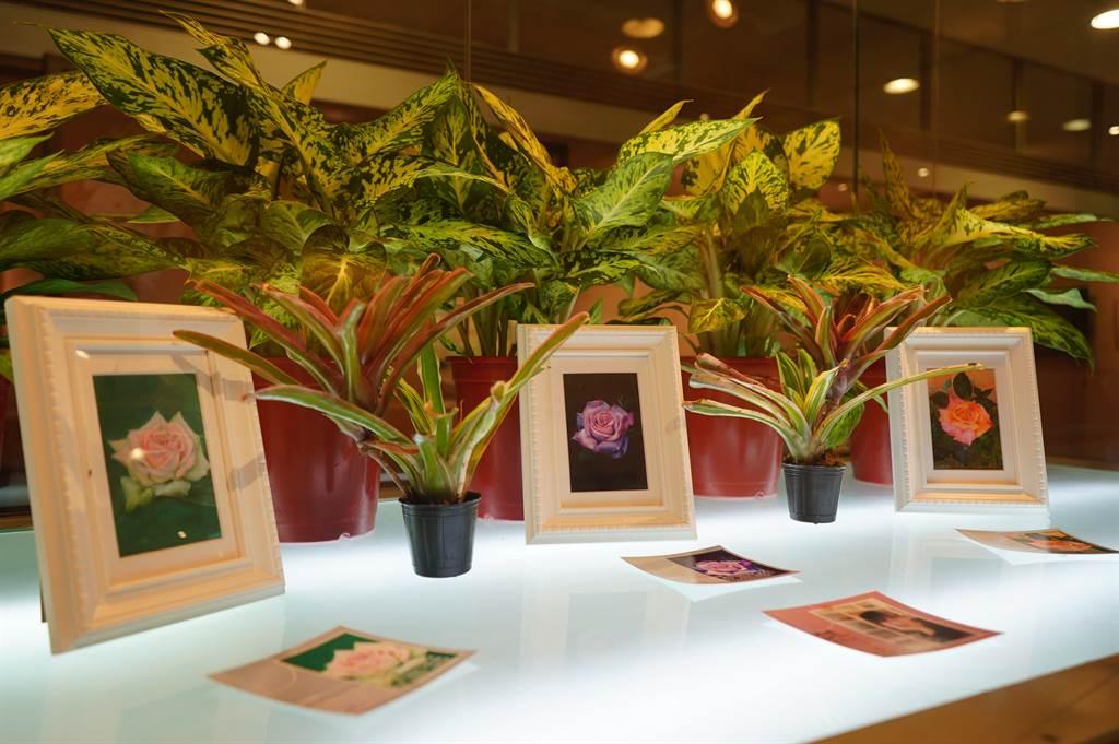 共有亞馬遜麗花檞寄生、卷葉空氣鳳梨、小精靈蝴蝶蘭等26件作品。成美文化園提供。