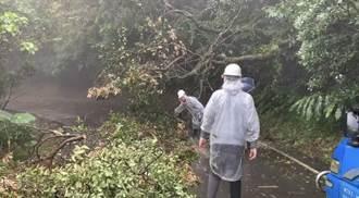 基隆德安路大樹橫躺阻通行 現場仍待搶修