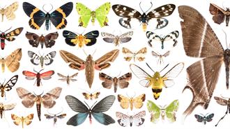 墾丁蛾類多樣性調查成果豐碩 發現59個新紀錄種與8個新種
