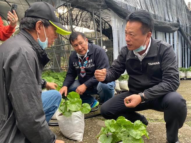 县长翁章梁(右)参观江金品(左)的山葵復育园,请益关于山葵产业相关问题。(张亦惠摄)