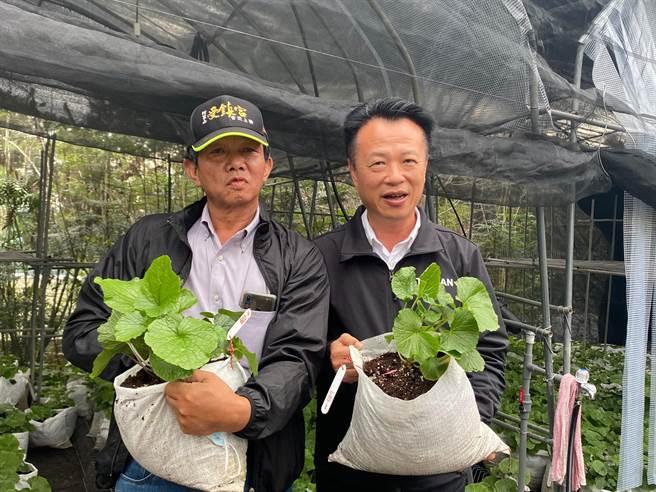 县长翁章梁(右)参观江金品的山葵復育园,请益山葵产业相关问题。(张亦惠摄)