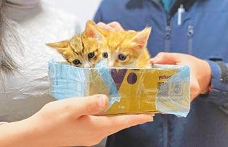 2幼貓受困黏鼠板 警爬天花板救援