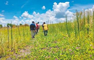 濁水溪防塵有成 見證生態保育
