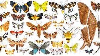 墾丁蛾類天堂 發現59個新紀錄種
