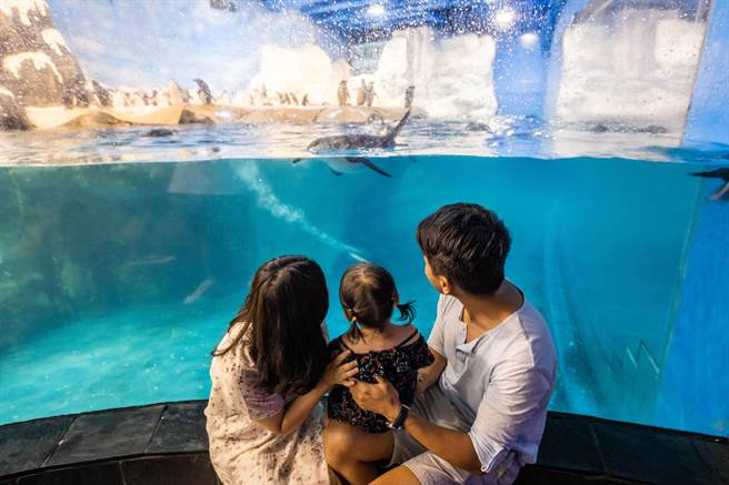 耶誕節將至,企鵝寶寶也將進入企鵝幼兒園,屏東海生館為慶祝並回饋遊客,首度推出雙12夜宿限時優惠。(謝佳潾攝)