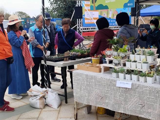 清新、疗癒的多肉植物摊位,受到游客的欢迎。(金寧乡公所提供)