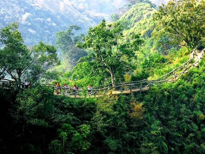 台中市大坑共有12條步道,其中5號步道祕境,綠意環繞,登山遊憩再添觀光助力。(台中市府觀旅局提供/盧金足台中傳真)