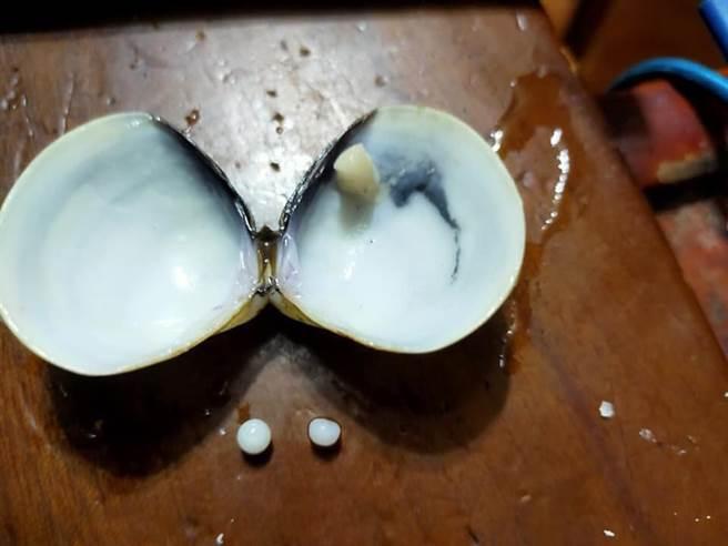 實際上蛤蜊並無珍珠層,只是單純分泌碳酸鈣,所以不會產出珍珠。(圖/Costco好市多 商品經驗老實說)