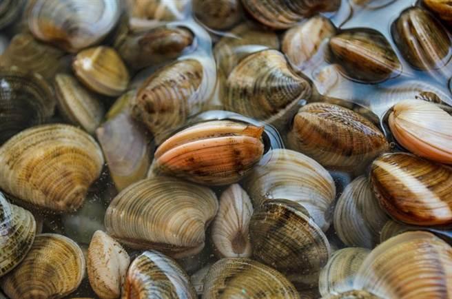 有網友吃好市多蛤蜊吃到2顆珍珠,興奮問「我要發財了嗎?」(蛤蜊示意圖/達志影像)