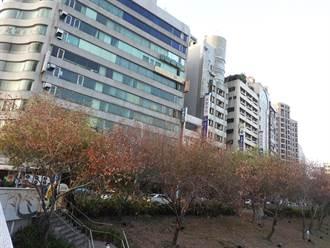 台中柳川沿岸部分樹木枯黃  水利局:枯水期加上工地抽地下水