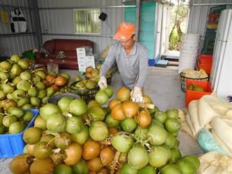 山區農村人力短缺 泰源技訓所收容人協助採收柑橙