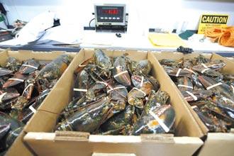美龍蝦銷歐免關稅