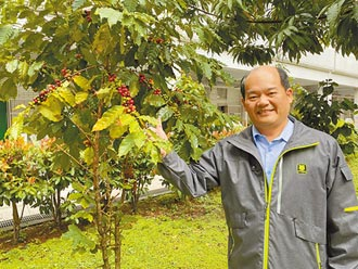 大崗國小種咖啡 師生化身小農