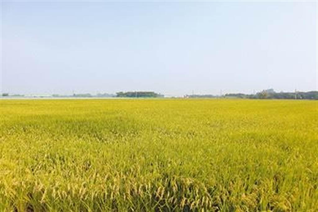 明年嘉南地區一期稻作停灌,農民可於本月1日起申請停灌補償,截止日期為12月20日。()