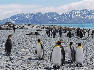 世界最大冰山北漂直逼 600萬企鵝恐遇死劫