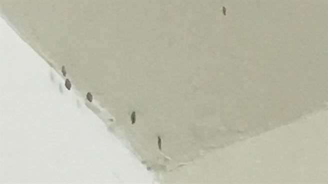 天花板突長出岩石狀的蟲,讓人看了頭皮發麻,有知情網友表示,這是太潮濕所致。(圖/翻攝自爆系知識家)