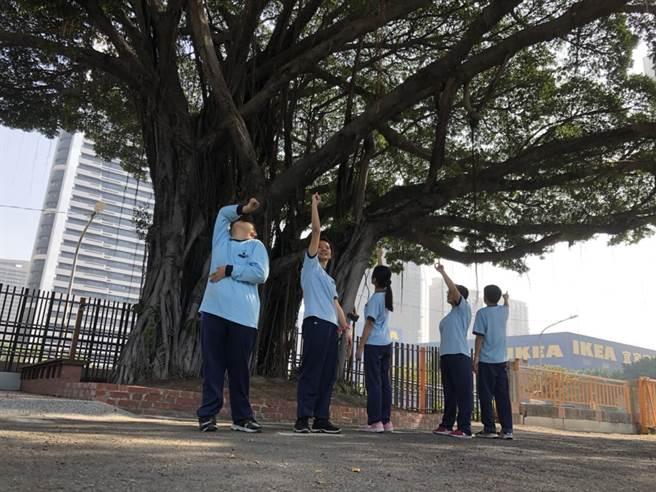 高雄成功特殊教育學校校內的百年老榕樹在校方的整頓下,現在已是前鎮地區相當聞名的特色,且成為大家拍照打卡的新地標。(洪浩軒攝)