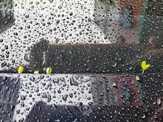 汐止连续阴雨一个月 轿车竟冒出小嫩芽 网笑喷:发展有机农业
