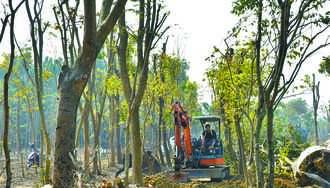 离谱 仁武园区2万棵树遭断头