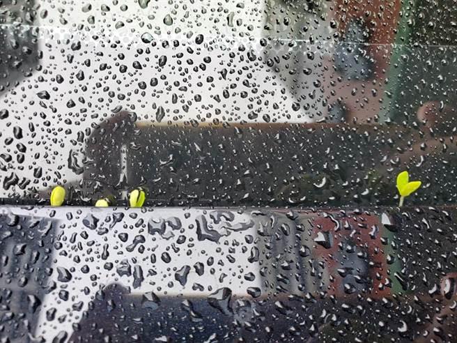 一名家住汐止的網友日前發現,因為已連續下雨近一個月,環境潮濕下,他的汽車擋風玻璃上竟冒出4顆小樹苗。(圖/翻攝自臉書汐止集團)