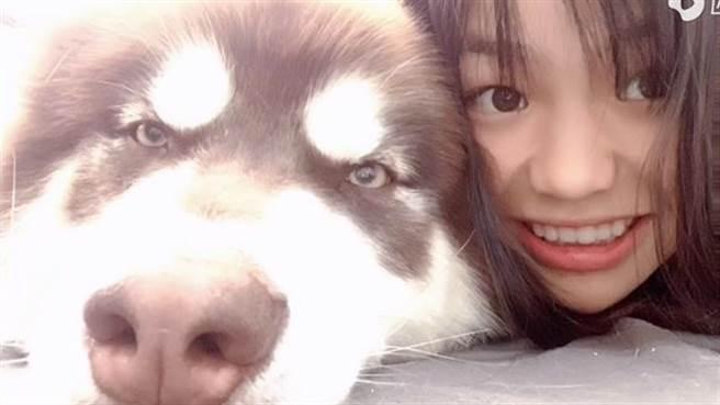 超人氣網紅狗狗「可樂」,證實已經在10月因心肌梗塞過世。(翻攝自微博/西瓜視頻)