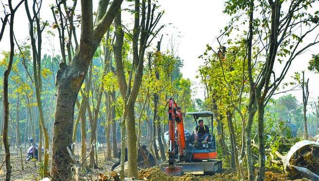 高市府委外的廠商在仁武區胡亂修剪樹木,經發局14日要求立即停工,圖為工人駕駛挖土機在現場清理。(林瑞益攝)