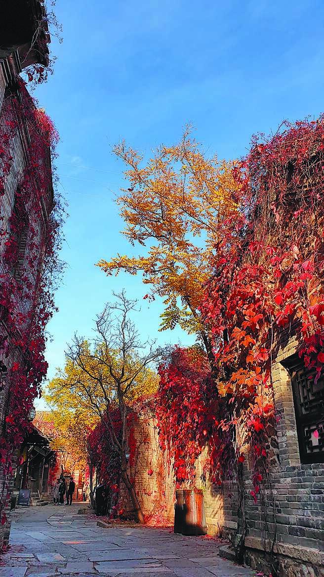 深秋的古北水镇,湛蓝无云的晴空,加上随处可见枫红与黄色的银杏叶,成为网红打卡地。(记者蓝孝威摄)