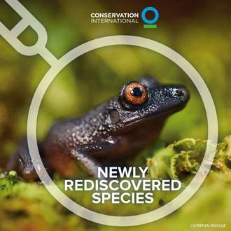 引誘滅絕20年魔眼蛙現蹤 意外目擊消失1世紀蝴蝶