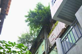 樹根貫穿老公寓 漏水嚇跑住戶