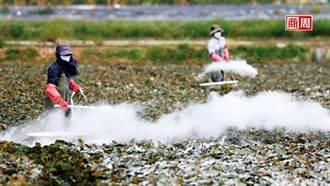 菱角田中的生態浩劫...他們為了救保育鳥類挨罵、甚至賠命