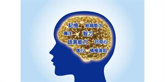 加速腦發展,神經鞘磷脂太重要!兒科醫師:把握三歲前黃金發展期補充關鍵營養