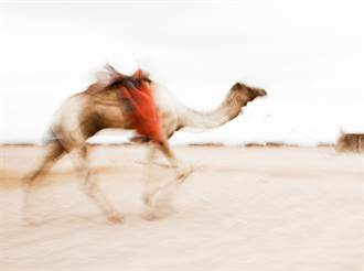 「肉彈駱駝」撞計程車秒肇逃 意外瞬間曝光