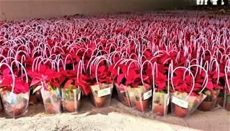 太地產贊助萬盆耶誕紅 慶祝中市中央公園啟用