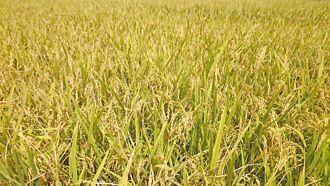 停灌若復耕 農委會追討補償金
