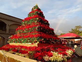 2000盆聖誕紅蓋成巨型金字塔!聖誕山城紅花節熱鬧開幕